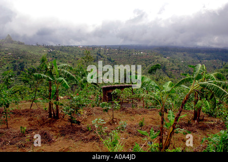Native hut and hillside banana plantation on the slopes of volcanic Gunung Agung, interior of Bali Indonesia - Stock Photo
