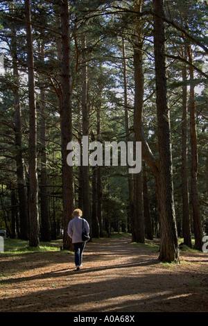 Walking in Glenmore Forest Park Rothiemurchus Aviemore Cairngorm National Park Scottish Highlands - Stock Photo