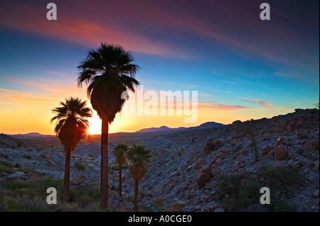Palm Springs Ca Desert Oasis Swimming Pool Beautiful Lovely Stock Photo Royalty Free Image