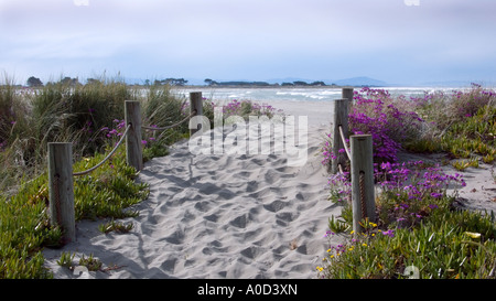 Flower lined track through to Sumner beach, Christchurch, New Zealand - Stock Photo