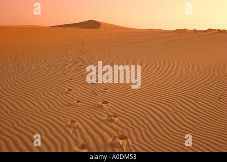 Vietnam Mui Ne white sand dunes at sunrise two lines of footprints in rippled sand - Stock Photo