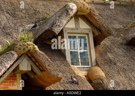 Pigeons on the cane roof of old house - Stock Photo