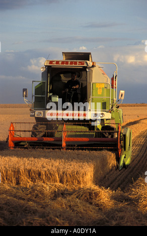 Combine harvester at work in a field near Bastwick Norfolk England - Stock Photo