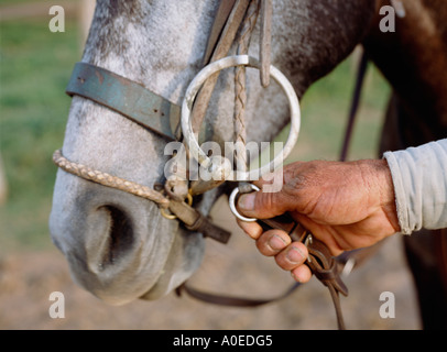 Close up of hand holding horse wearing bridle Pampas Argentina - Stock Photo