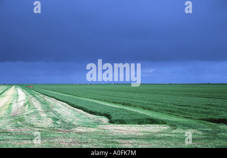 pastureland, partial swath, with dark sky, Netherlands, Frisia - Stock Photo
