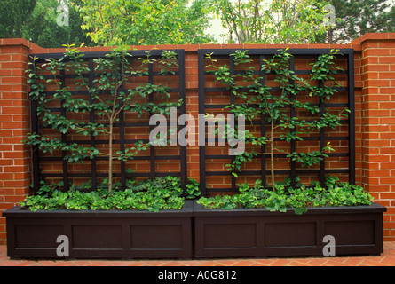 Formal brick courtyard wall with espaliered pear tree on wrought iron trellis, matching planters and brick patio, - Stock Photo