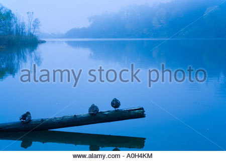 Ducks on foggy day in autumn at Grenadier Pond in High park in Toronto Ontario Canada - Stock Photo