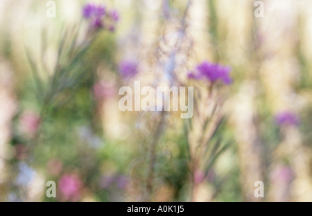 Impressionistic close up of stems of Rosebay willowherb or Fireweed or Epilobium angustifolium in late summer - Stock Photo