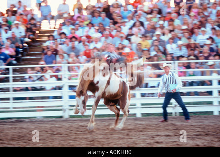 Rodeo rider on bronco trying to buck him off at a rodeo in Wisconsin - Stock Photo