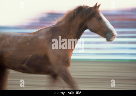 Bronco riding horse speeds by at a rodeo in Wisconsin - Stock Photo