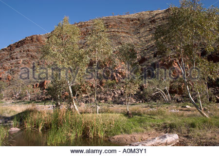 Small waterhole in the Hale River lined with gum trees in Ruby Gap Nature Park East MacDonnell Ranges in the Northern - Stock Photo
