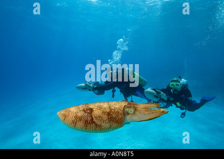 Divers (MR) on underwater scooters and a common cuttlefish, Sepia officinalis, in Palau, Micronesia. - Stock Photo