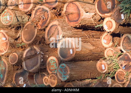 Low angle view of log stack at sunset in northern California - Stock Photo
