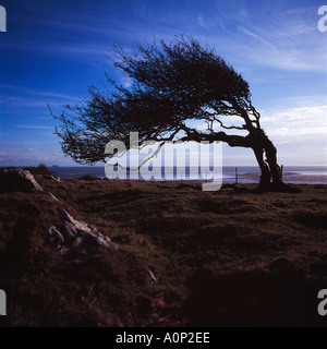 Silhouette of Windswept Tree on Morecambe Bay with Heysham Nuclear Power Station in the distance - Stock Photo
