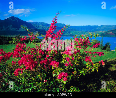Bougainvillaea at Hanalei Bay Hanalei National Wildlife Refuge beyond Island of Kauai Hawaii - Stock Photo