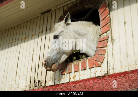 Horse in stables on way to Monteverde Costa Rica Central America - Stock Photo