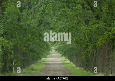 Oak avenue - Stock Photo
