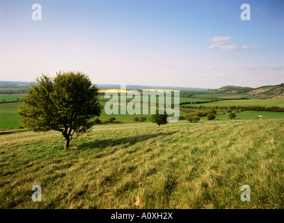 Ivinghoe Beacon from the Ridgeway Path Chiltern Hills Buckinghamshire England United Kingdom Europe - Stock Photo