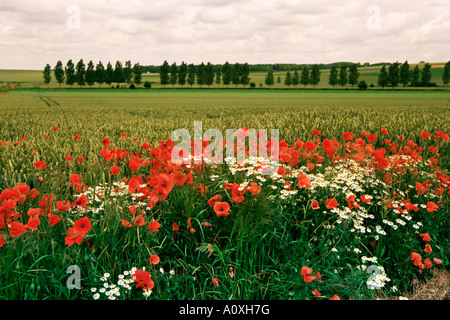 Poppies in the Valley of the Somme near Mons Nord Picardy France Europe - Stock Photo