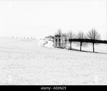 monochrome version of AJ04AA distant tree lined road seen across snowy field norfolk england uk britain eu europe - Stock Photo