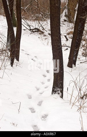 Footsteps in Snow at Hidden Lake Gardens - Stock Photo