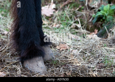 donkey hoofs  - Stock Photo
