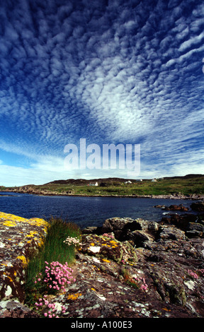 Thrift on lichen covered rocks in foreground with altocumulus cloud behind, Wester Ross, Scotland, UK - Stock Photo