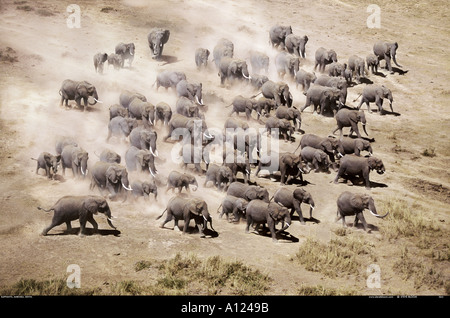 Aerial of African elephants Amboseli National Park Kenya - Stock Photo