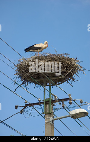 Hungary stork on nest on top of power telephone pole - Stock Photo