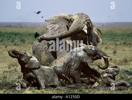 Elephant family wallowing in mud Masai Mara Kenya - Stock Photo