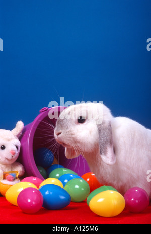 Holland Lop Bunny With Plastic Easter Eggs And Stuffed Toy Blue Background PR 128b