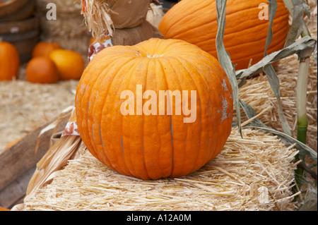 Orange Pumpkins on a market - Stock Photo