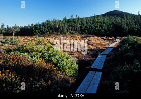 Wooden footbridge through a high elevation bog on Mount Jackson White Mountain N F Appalachian Trail - Stock Photo