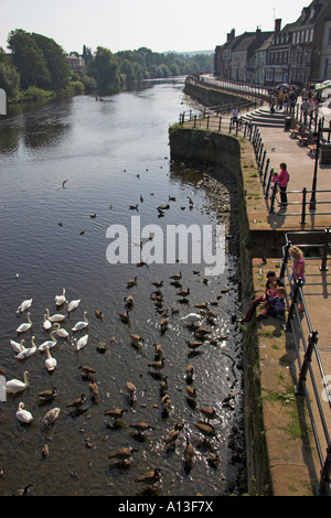 River Severn and Severnside South, Bewdley, Hereford and Worcester, England, UK - Stock Photo