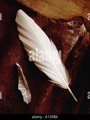still life of a white feather on a rusty bkg - Stock Photo
