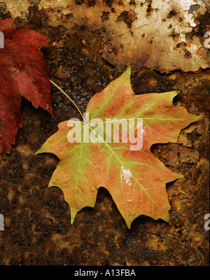 Maple leaf on rusty background - Stock Photo
