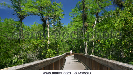 walking on a boardwalk at the Everglades National Park, Florida - Stock Photo