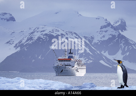 King penguin and ship Antarctica - Stock Photo