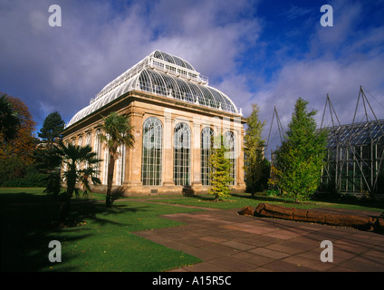dh  ROYAL BOTANIC GARDEN EDINBURGH Palm tree glasshouse scottish botanical gardens scotland house