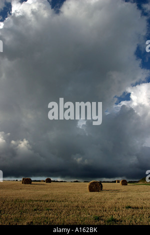 bales of hay rolled up in a field waiting to be  collected and stacked in a barn, or covered  in plastic for storage - Stock Photo