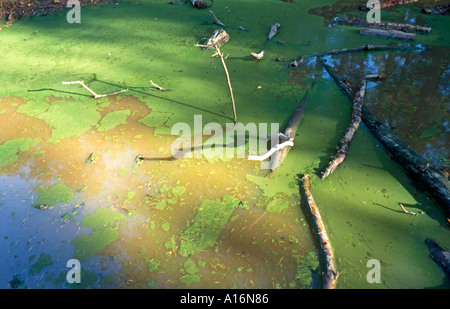 Pond scum on dirty water - Stock Photo