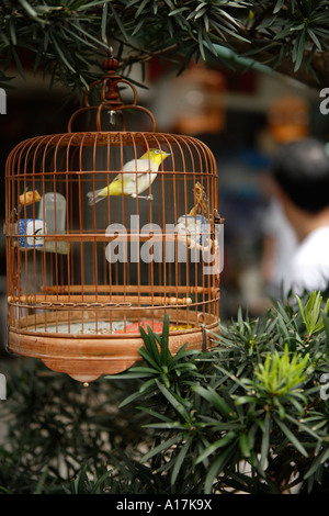 The Bird and Flower Market, Kowloon. - Stock Photo
