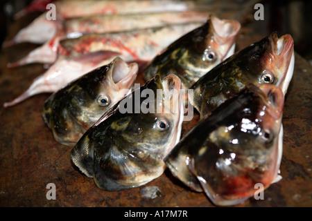 Fish Heads, Central Market, Shunde, Foshan, GuangDong, China. - Stock Photo