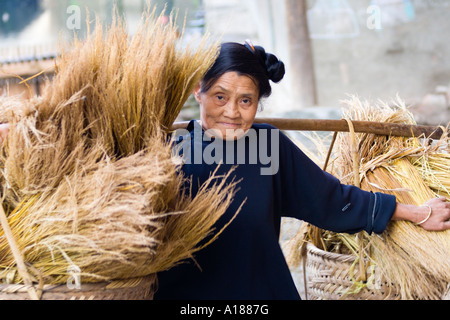 Aging Woman in Indigo Carrying Hay Dong Ethnic Minority Town of Zhaoxing China - Stock Photo