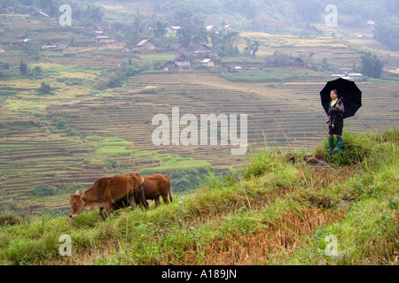 2007 Hmong Girl in Traditional Clothes Grazes Cattle Sapa Vietnam - Stock Photo