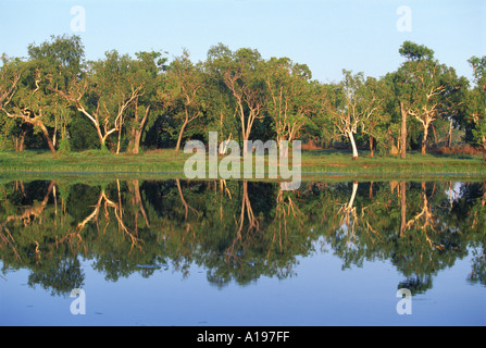 Reflections of eucalyptus or gum trees on Annaburroo Billabong near the Arnhem Highway at the Mary River Crossing - Stock Photo