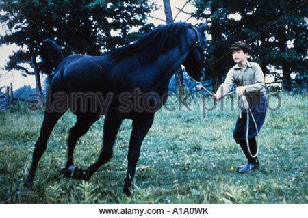 The Black Stallion Year 1979 Director Carroll Ballard - Stock Photo