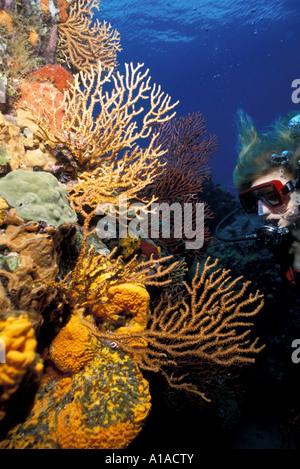 St Lucia woman diver Saint Lucia underwater large coral sea fans bright Caribbean colors - Stock Photo