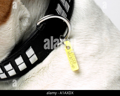 A tag on a collar that shows a dog is microchipped. - Stock Photo