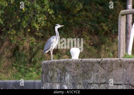 Heron standing near bollard at Vale Royal locks on the River Weaver - Stock Photo